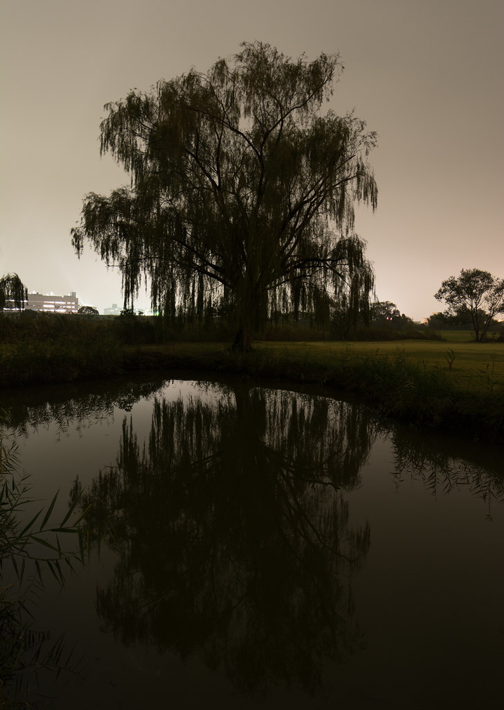#313 Willow tree and reflection at night