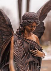 Cemetery Angel  5