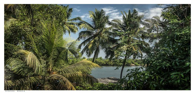 View from my room in the jungle, River sal, Goa, India.
