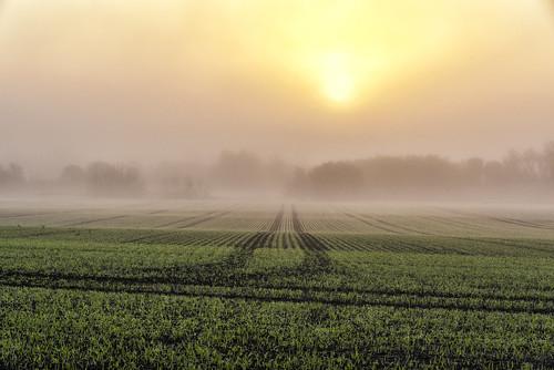 fog mist misty morning sunrise sun light field green pastures grass winter uk cambridgeshire england outdoor landscape tracks trail nature tree trees line