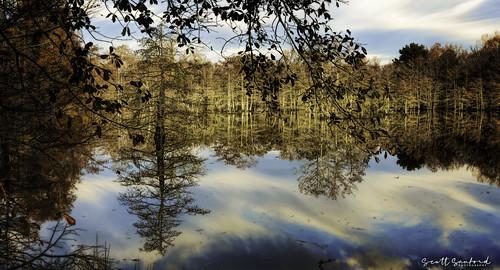 6d canon cypress eos lake morning naturalbeauty naturallight nature outdoor reflection sunlight texas topazlabs water beautiful swamp trees ef24105mmf4lisusm martindiesjrstatepark
