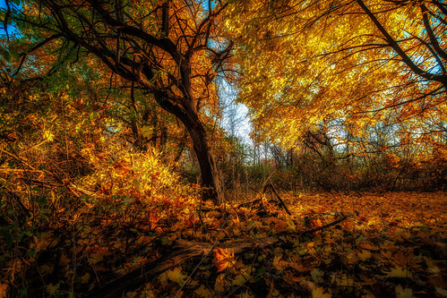 catskill newyork unitedstates us 5dmk4 1740l eos ef llenses landscape light leaves fall outdoors orange