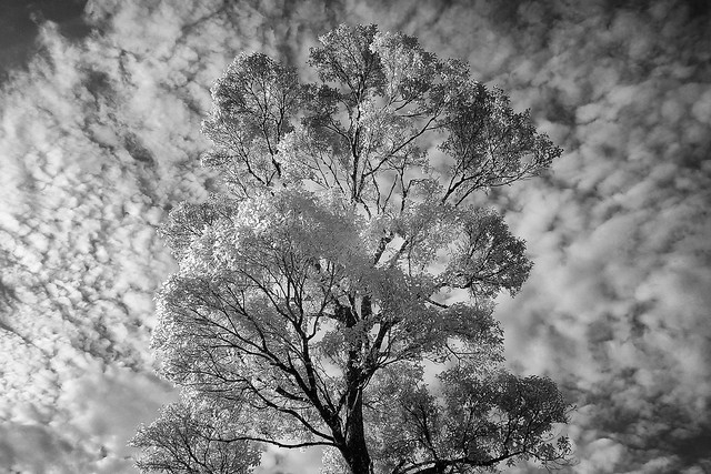 Tree & Clouds