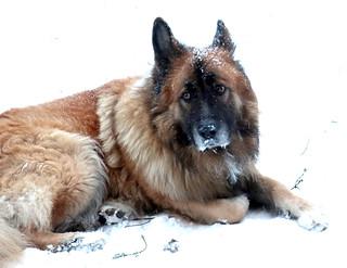 It's snowing...  Potap is sad... | by irishishka