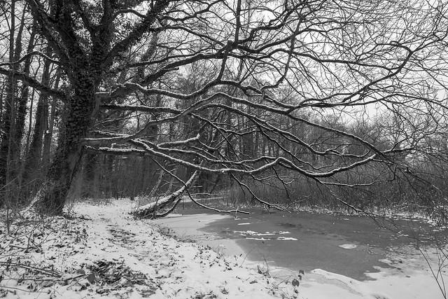 Loaded oak
