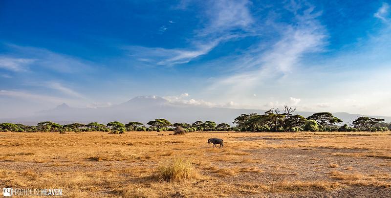 Kenya - 0019-HDR