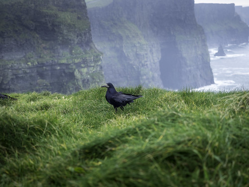 cliffsofmoher green ireland place travel outdoors traveldestination vacation