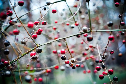 berry nature