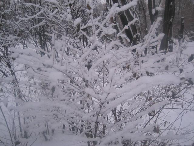 snow everywhere ... after snowfall