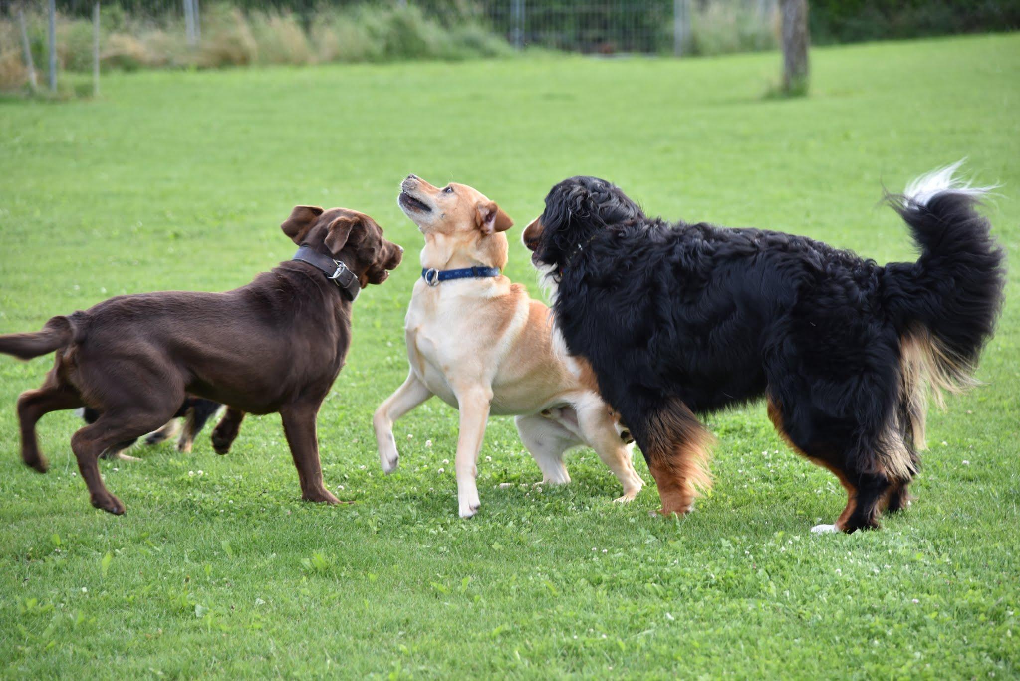 Impressionen Training Familienhundegruppe