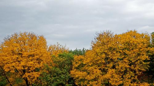 sonydschx80 maiac detroitzoo rooftop trees autumn