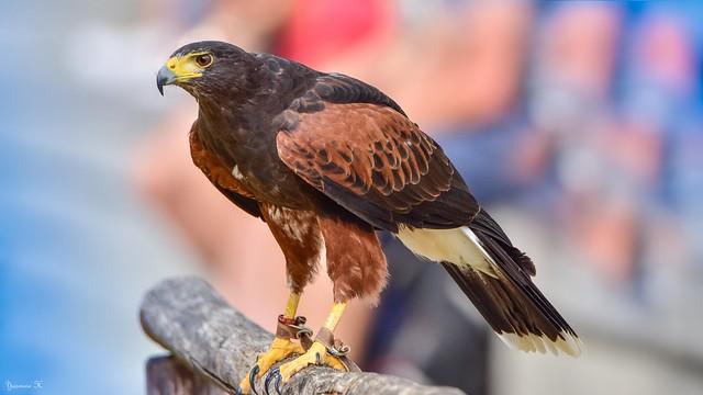 Bird - 6159