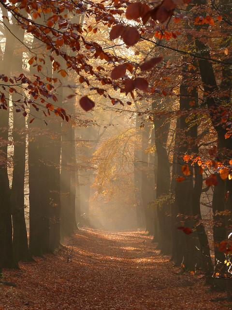 Autumn is heaven