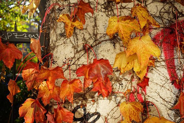 Autumn fragment, Skalitzer Straße