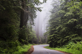 Redwood National and State Park on U.S. 101 in Northern California. Original image from Carol M. Highsmith's America, Library of Congress collection. Digitally enhanced by rawpixel. | by Free Public Domain Illustrations by rawpixel