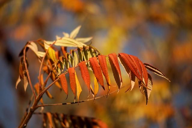 Autumn with Tokina AT-X 2,8-60-120mm #3