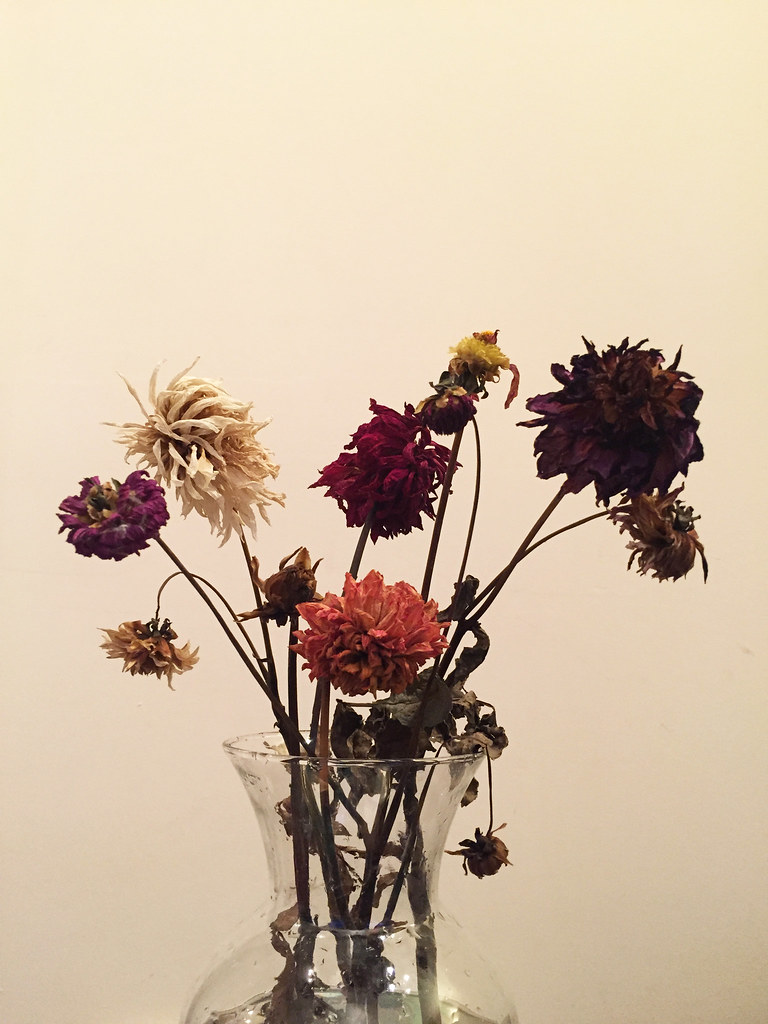 dead flowers   Caetano...