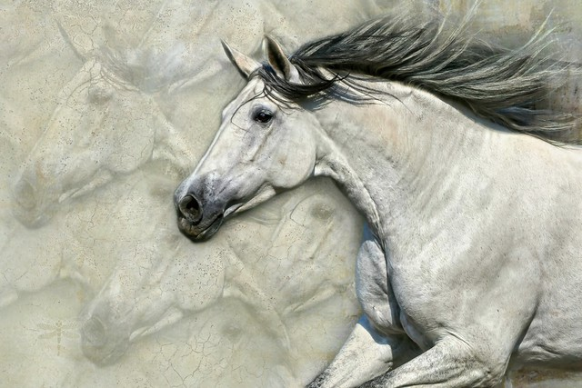 may the wild horse run free forever . . .