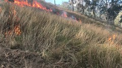 Wildfire - Linville Qld -20180817