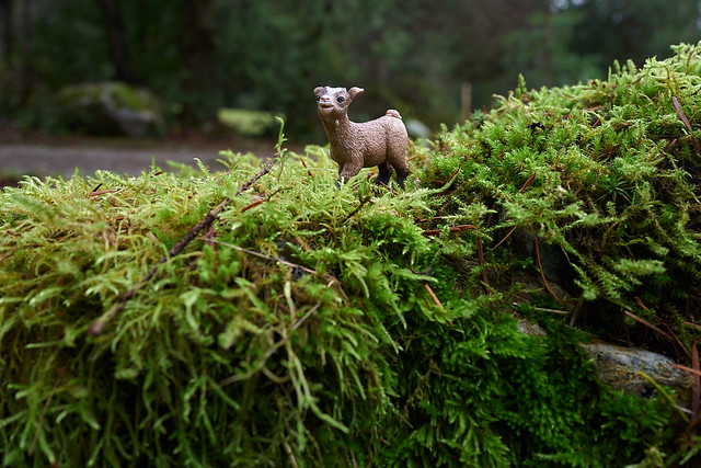 baby goat just really likes moss