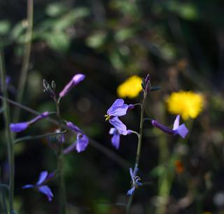 Wild flowers | by Ignacio de Luis