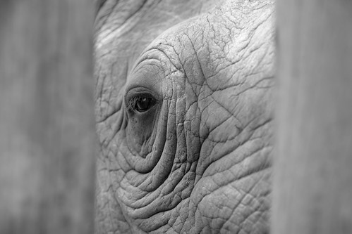 Melancholy Rhino | by Mark and Sara