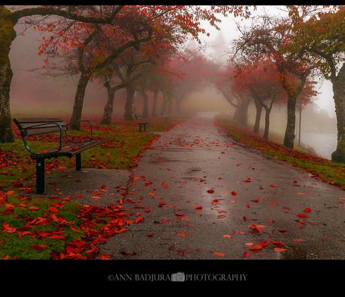 DSC08339 | by ann.badjura