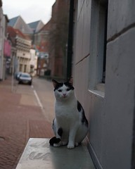 Encounter in Zwolle #catsofinstagram #pentaxkp #40mm