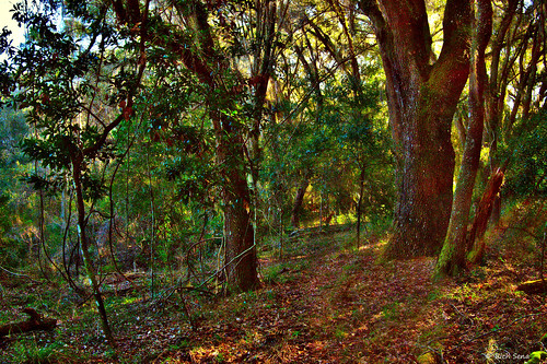trees deer trail sunrise florida woods forest outside lumixg7 panasonic outdoors nature