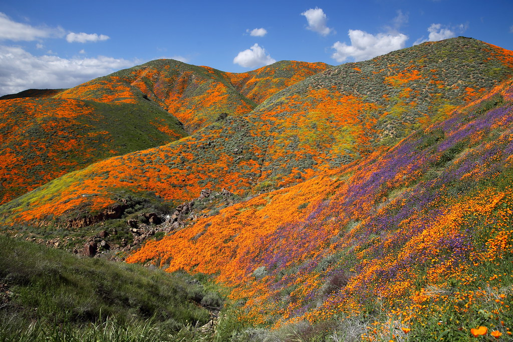 California Superbloom 2019