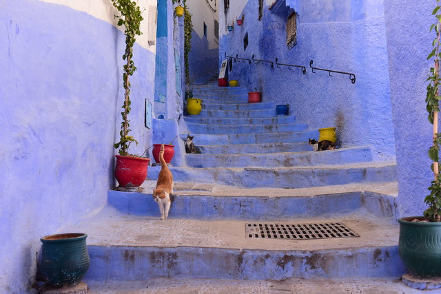 Chefchaouen, Morocco, January 2019 D810_818