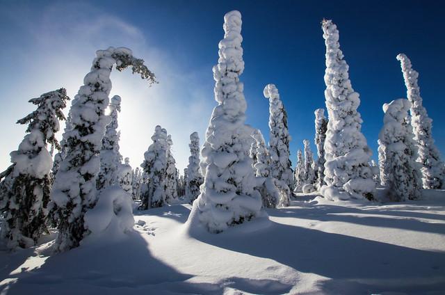 Winter Wonderland - Riisitunturi National Park