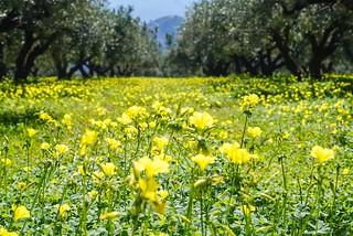 Kreetan kevät | by terhikokko