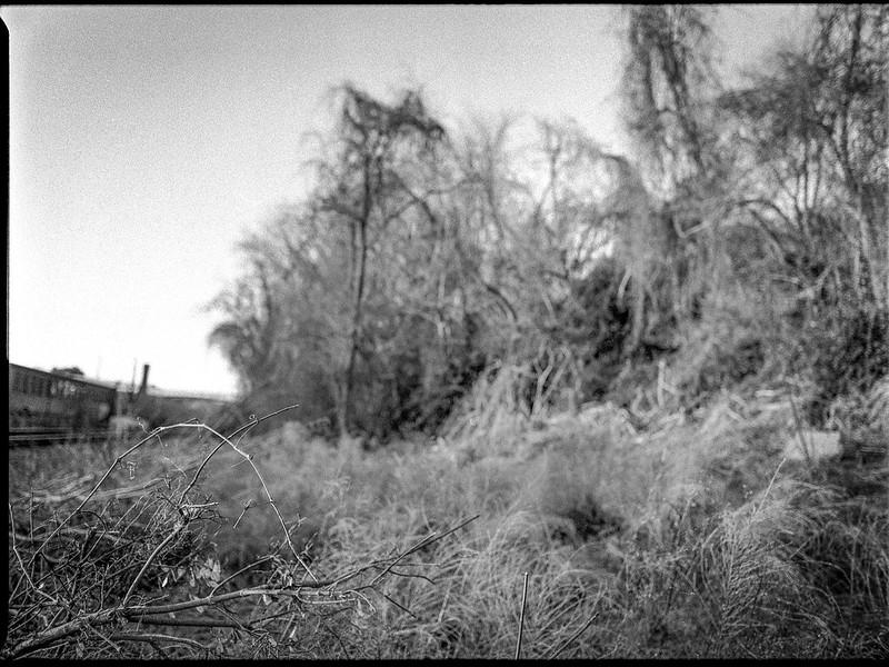 winter landscape, grasses, trees, railroad, smokestack, River District, Ashevile, North Carolina, Mamiya 645 Pro, mamiya sekor 45mm f-2.8, Bergger Pancro 400, Ilford Ilfosol 3 developer, 1.5.19