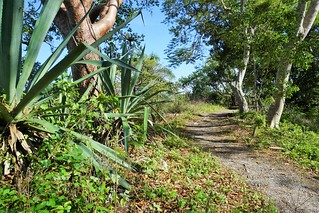 Calusa Heritage Trail at the Randell Research Center in Pineland, Fla., Dec. 29, 2018 | by JenniferHuber