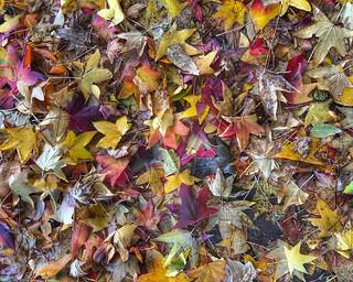 Autumn Underfoot | by ahockley
