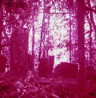 Tombstones | by TAZMPictures