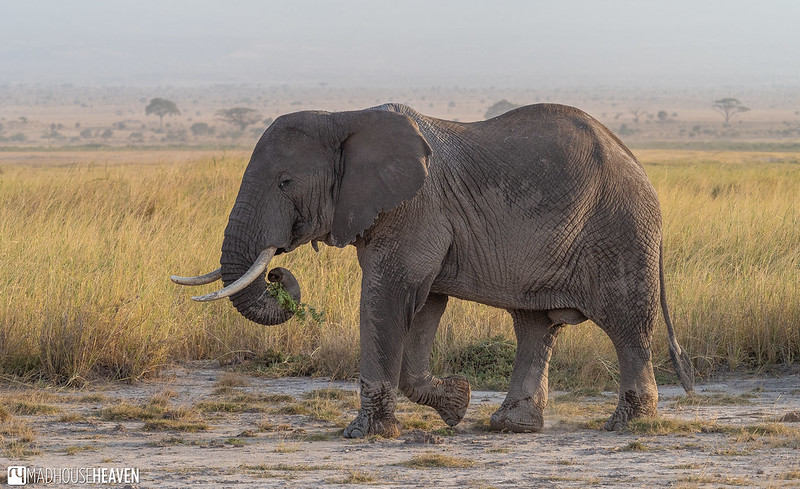 Kenya - 0105