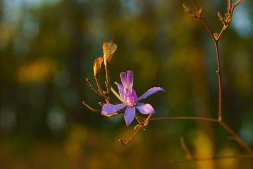 Цветы октября / Flowers of october | by Владимир-61