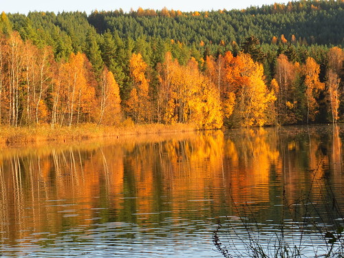 outdoor nature see pond thuringia thüringen tree teich autumn herbst boat fall ngc