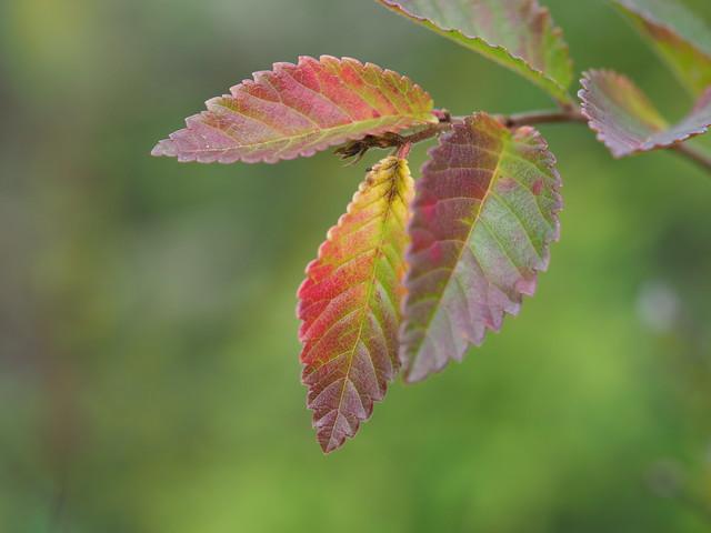 OMD EM1 11.23.2018 autumn leaves