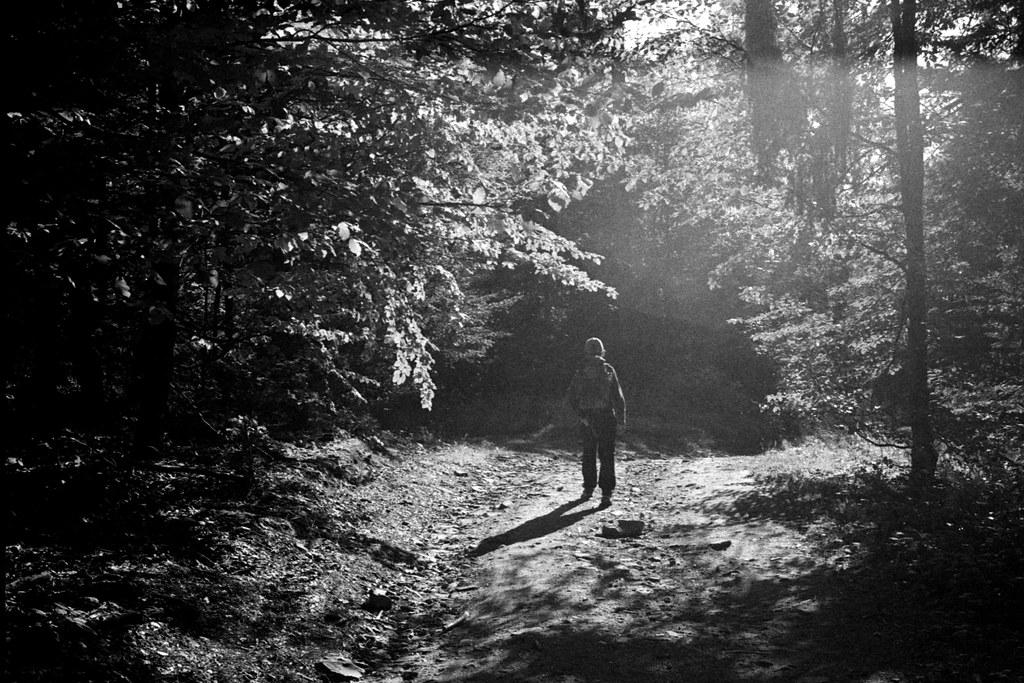 Forest walk / Spacer po lesie
