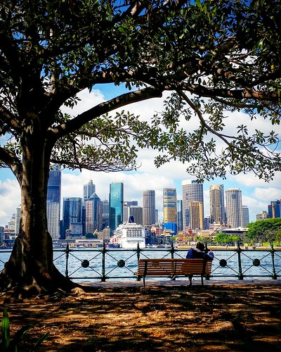 sydney cityskyline ilovesydney milsonspoint australia beautifulview sydneyharbour circularquay framing outdoor compositiom colours lighting newsouthwales travelphotography water fences underthetree whataview lovethisplace ngc pov naturalframing