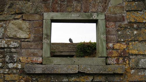 Un pigeon se trouve dans une fenêtre ouverte à Charles Fort, Kinsale, Irlande