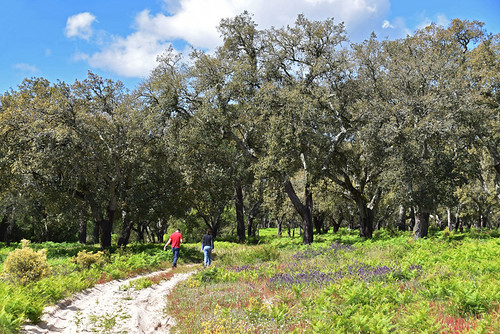 Walking through forest, Sesimbra to Azeitao, Arrabida | by BuzzTrips