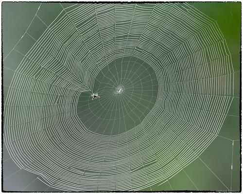 florida raphaelkopanphotography nealpreserve d500 nikkor600f4evr nikon 14xtciii spider