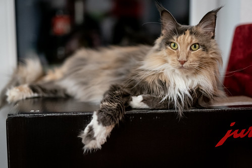 015 - cats cats cats- A9506448 | by NEX69