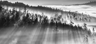 Lampai | by Noel F.