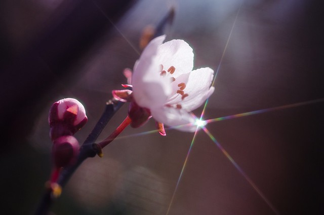 Little star of spring ☀️🌸