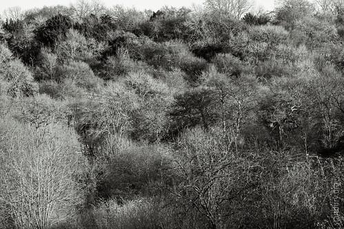 Warburg Reserve, Bix Bottom | by FlickrDelusions